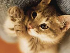 让猫咪别再爬主人的被窝